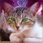 """""""yeşil gözlü miskin kedi"""" by alemdag"""