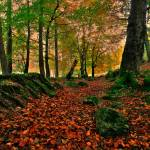 """""""Autumn Forest"""" by harkness_john"""