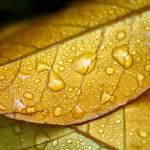 """""""Autumn"""" by M4gic"""