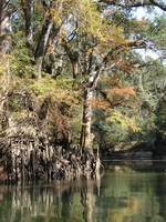 Chipola River Fall 042