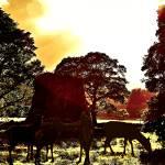 """""""The Dun at Dawn"""" by kenart"""