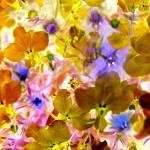"""Spring"" by DavidRoupell"