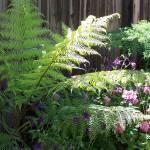 """""""Lush ferns"""" by bppy1"""
