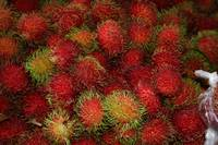 Rambutan in Hawaii