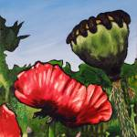 """Poppies and Pod"" by harryboardman"