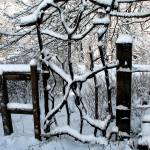 """Snowy Gate"" by Newleaf"