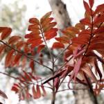 """""""Red Leaves"""" by emolee84"""