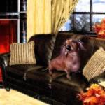 """""""Fireside Dachshund Heidi"""" by krysshaw"""