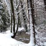 """Galloping Goose Trail in Winter"" by Newleaf"