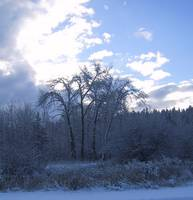 Winter Trees     0596