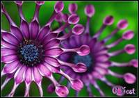African daisy and friend!