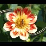 """FLOWER PORTRAITS"" by sandytravel"