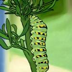 """Caterpillar on Parsley"" by harryboardman"