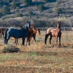 """""""Almost wild horses"""" by iHorse"""
