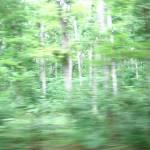 """""""mystic woods"""" by markalanhamilton"""