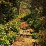 """Light on a Woodland Path"" by ArteZoe"