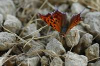 Funny butterfly