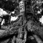 """Tree Of Lamentation (B&W Overlay Version)"" by jonsheer"
