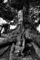 Tree Of Lamentation (B&W Overlay Version)