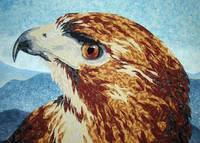 Mya - Red-tail hawk