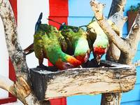Hungry Parrots