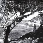 """Point Lobos"" by DBCArtwork"