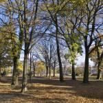 """""""Parc en automne"""" by recto-verso"""