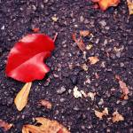 """Red Leaf and Asphalt"" by lamkini"