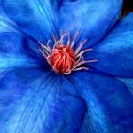 """RedWhite&Blue"" by Artlife"
