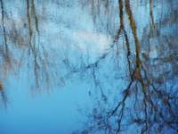 Reflections in blue