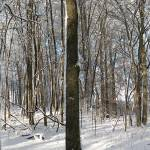 """Winter Woodland Panoramic"" by DavidRogers"