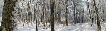 Winter Woodland Panoramic