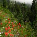 """Flowers of Mt. Rainier"" by RODADOD"