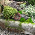 """Mossy Trough Garden"" by bettymackey"