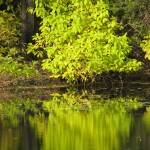 """""""Reflection In Green"""" by mmcclain"""