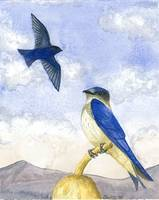Purple Martins Majesty