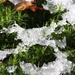 """""""snowflakes on moss"""" by leoaltoriso"""