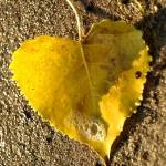 """""""Fall leaf"""" by RodicaNelson"""