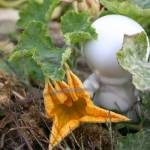 """Munny and a Squash Flower"" by amylitt"