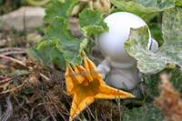 Munny and a Squash Flower