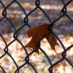 """Fall Fence"" by liadona"
