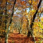 """Autumn Trail"" by Cynthia_Burkhardt"