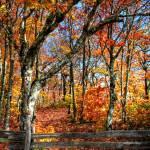 """Blue Ridge Autumn"" by Cynthia_Burkhardt"