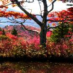 """""""Blue Ridge Fall Reflections"""" by Cynthia_Burkhardt"""