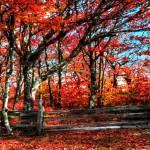 """Blue Ridge in Red"" by Cynthia_Burkhardt"