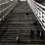 """San Diego bridge"" by blackmonam"
