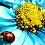 """ladybug"" by josedaniel"