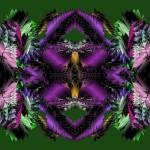 """Christmas Poinsettias 2-03"" by infinitefascination"