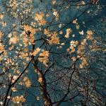 """november dream"" by eduard_c"