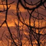 """""""Amber Sky"""" by tomwachtel"""